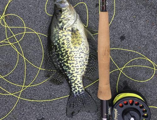 Pesca en río Yuso tierra de la reina